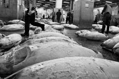 tuna [ tokyo ] © remmert bolderman photography